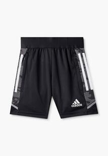Шорты спортивные Adidas AD002EBLWIR7CM176