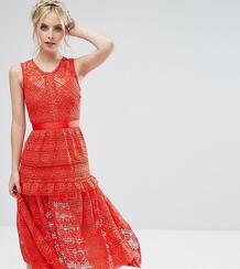 Кружевное короткое приталенное платье для выпускного True Decadence Pe True Decadence Petite 1013744